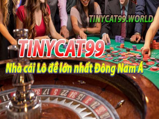 Tinycat99 Ở Đâu? Trụ Sở Chính Và Những Điều Cần Biết