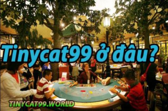 Tinycat99 ở Đâu? Tổng hành dinh Chính và những Điều cần biết